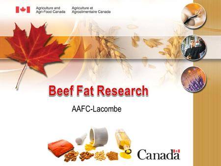 AAFC-Lacombe. Why conduct beef fat research? A 1200 lb steer with ½ inch backfat, average muscling, yields a 750 pound carcass. The 750 pound carcass.