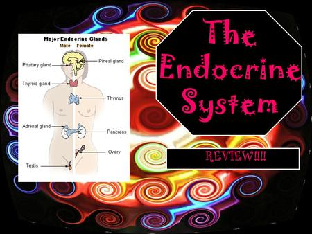 The Endocrine System REVIEW!!!!. These are the main parts of the endocrine system…