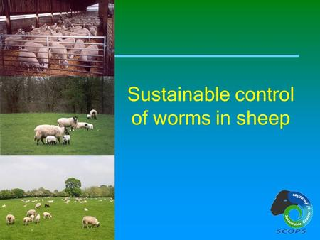 Sustainable control of worms in sheep. Sustainable worm control in sheep This slide show has been made available by SCOPS. Sustainable Control of Parasites.