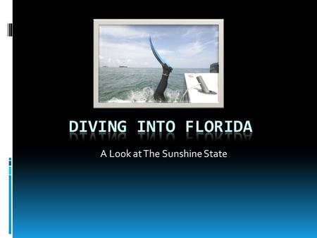A Look at The Sunshine State Florida Basics  Flag  Bird  Flower  Seal.