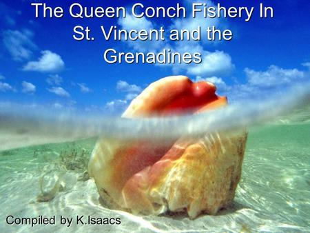 The Queen Conch Fishery In St. Vincent and the Grenadines Compiled by K.Isaacs.