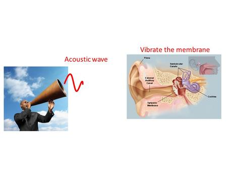 Vibrate the membrane Acoustic wave.