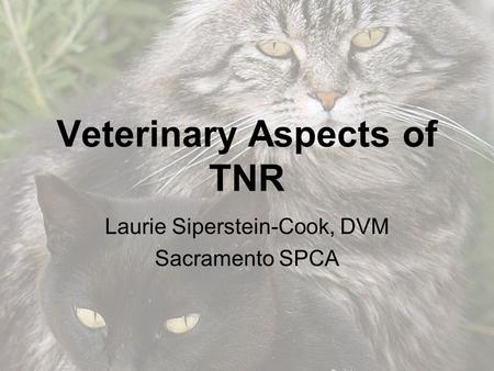 Veterinary Aspects of TNR Laurie Siperstein-Cook, DVM Sacramento SPCA.