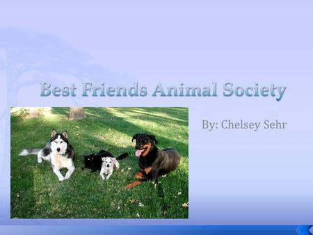 By: Chelsey Sehr.  Best Friends Animal Society is guided by a simple philosophy: kindness to animals builds a better world for all of us.  Best Friends'