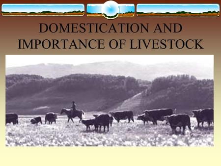 DOMESTICATION AND IMPORTANCE OF LIVESTOCK. LIVESTOCK DEFINED:  The term livestock is normally defined as animals raised to produce milk, meat, work,