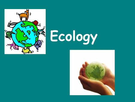 Ecology. Everything is Connected __________- the study of the interactions between organisms and their environment Ecology.