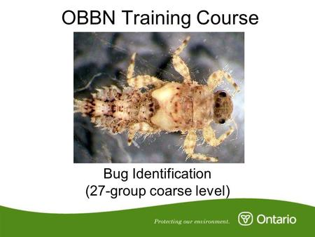 OBBN Training Course Bug Identification (27-group coarse level)