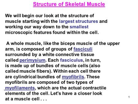 1 Structure of Skeletal Muscle We will begin our look at the structure of muscle starting with the largest structures and working our way down to the smallest.