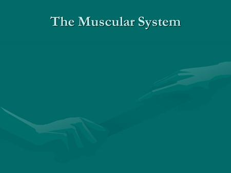 The Muscular System. To return to the chapter summary click escape or close this document.