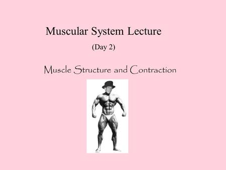 Muscular System Lecture (Day 2) Muscle Structure and Contraction.