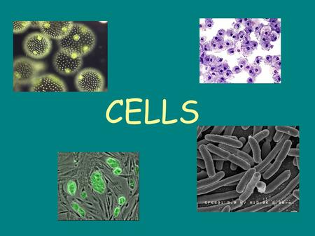 CELLS. __________ organisms are made up of just one cell Examples are __________________________ This cell can live on its own in the absence of other.
