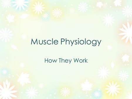 Muscles are made of many individual cells called fibers The Fascia connects the individual fibers to form a muscle and it separates muscles from each.
