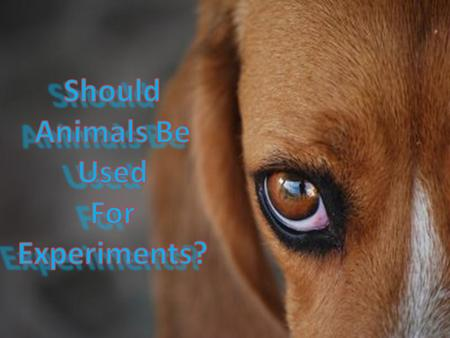 Should Animals Be Used For Experiments?.