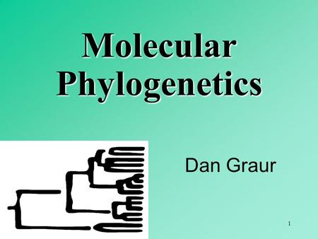 1 Dan Graur Molecular Phylogenetics. 2 3 4 5 6 Molecular phylogenetic approaches: 1. distance-matrix (based on distance measures) 2. character-state.