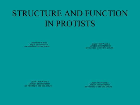 STRUCTURE AND FUNCTION IN PROTISTS. Amoeba proteus: formation of pseudopods.