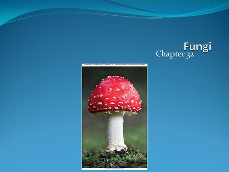 Chapter 32. Defining Fungi Mycologists believe there may be as many as 1.5 million fungal species Single-celled or multicellular Sexual or asexual Specialized.