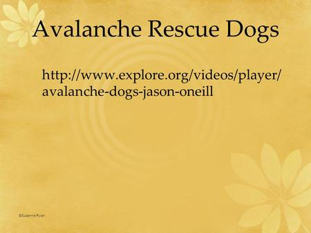 Avalanche Rescue Dogs  avalanche-dogs-jason-oneill ©Suzanne Ryan 1.