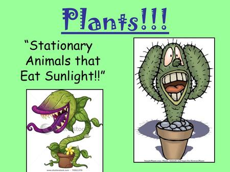 """Stationary Animals that Eat Sunlight!!"""