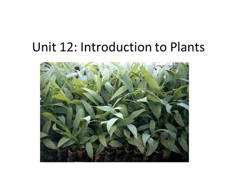 Unit 12: Introduction to Plants. Objectives ● I can describe 3 adaptations plants have made to live on land ● I can describe the advantages of 3 different.