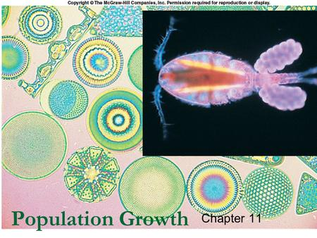 1 1 Population Growth Chapter 11. 2 2 Outline Geometric Growth Exponential Growth Logistic Population Growth Limits to Population Growth  Density Dependent.