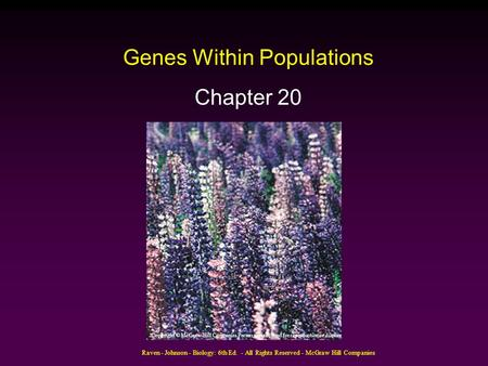 Raven - Johnson - Biology: 6th Ed. - All Rights Reserved - McGraw Hill Companies Genes Within Populations Chapter 20 Copyright © McGraw-Hill Companies.