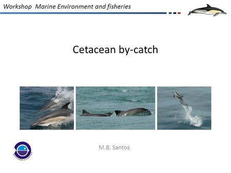 Cetacean by-catch M.B. Santos Workshop Marine Environment and fisheries.