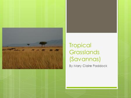Tropical Grasslands (Savannas) By Mary Claire Paddock.