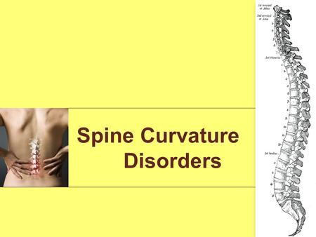 Spine Curvature Disorders. 123 The spine, or backbone, is made up of small bones (vertebrae) stacked -- along with discs -one on top of another. A healthy.