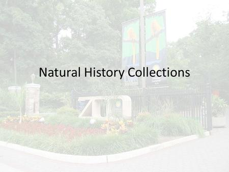 Natural History Collections. Types of Natural History Collections Natural History Museums – Plants – Animals Skeletons Preserved – Fossils – Anthropology.