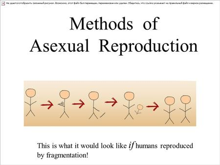 Methods of Asexual Reproduction This is what it would look like if humans reproduced by fragmentation!