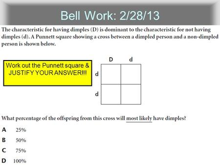 Bell Work: 2/28/13 Work out the Punnett square & JUSTIFY YOUR ANSWER!!!