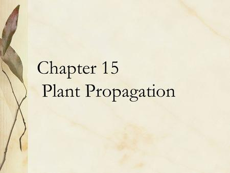 Chapter 15 Plant Propagation. Asexual Reproduction Cuttings Grafting Budding Layering Division Rhizomes Stolons Tillers or Suckers.