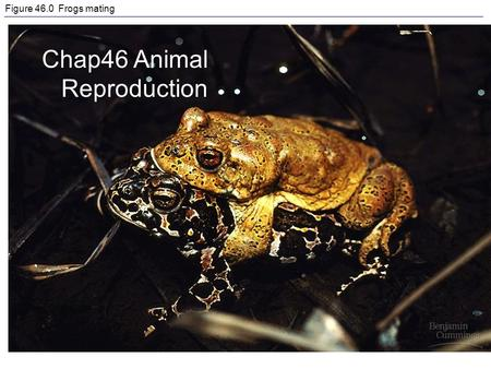 Figure 46.0 Frogs mating Chap46 Animal Reproduction.