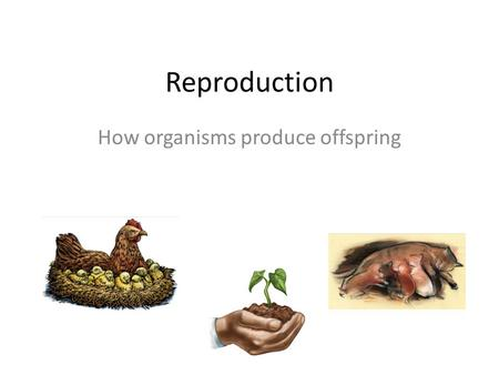 Reproduction How organisms produce offspring. There are two kinds of Reproduction 1.Asexual reproduction 2.Sexual reproduction.