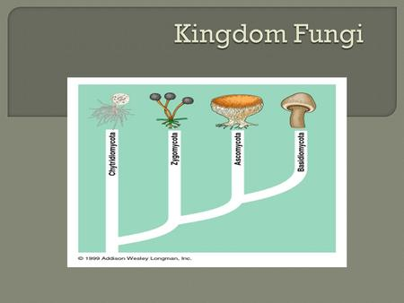  Fungi were once classified as a member of the plant kingdom, however, we soon found enough differences to put them in their own kingdom!  Fungi are.