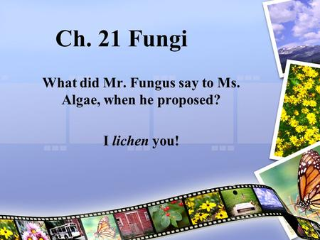Ch. 21 Fungi What did Mr. Fungus say to Ms. Algae, when he proposed? I lichen you!