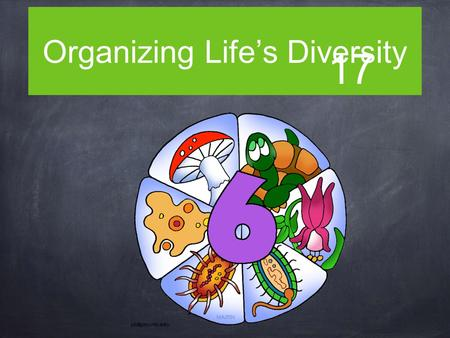 Organizing Life's Diversity 17. The Big Idea Evolution underlies the classification of life's diversity.