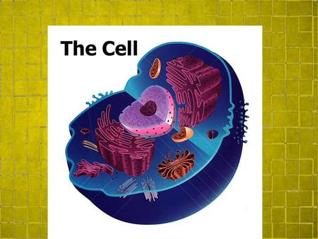 The Cell. Topic 2.5 Cell Division Mitosis Cellular division in eukaryotic cells. Chromatin is arranged into chromosomes. Chromosomes double. Cell grows.