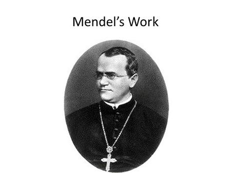 Mendel's Work. Genetics: The scientific study of heredity. – Heredity: The passing of physical characteristics from parents to offspring. Traits: the.