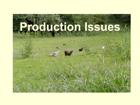 Feed Issues Optimal health Optimal growth Different formulations for standard poultry breeds and industrial strains Different formulations for grow-out,