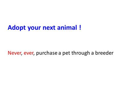 Adopt your next animal ! Never, ever, purchase a pet through a breeder.