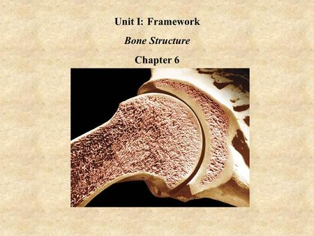 Unit I: Framework Bone Structure Chapter 6. The Human Skeleton AdvantageDisadvantage Weight Structure Number of Bones.