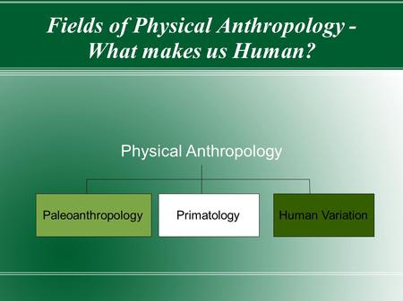 Fields of Physical Anthropology - What makes us Human?