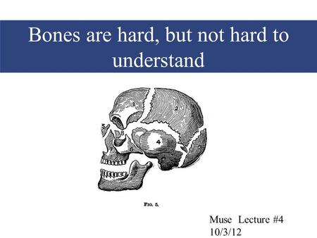Bones are hard, but not hard to understand Muse Lecture #4 10/3/12.