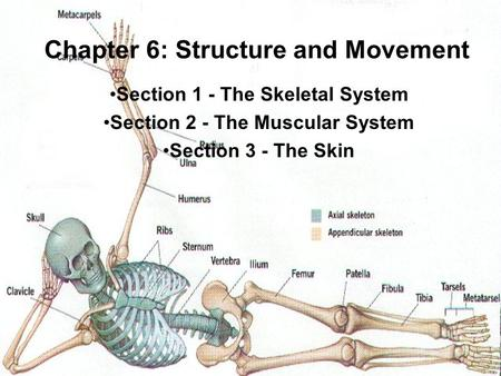 Chapter 6: Structure and Movement