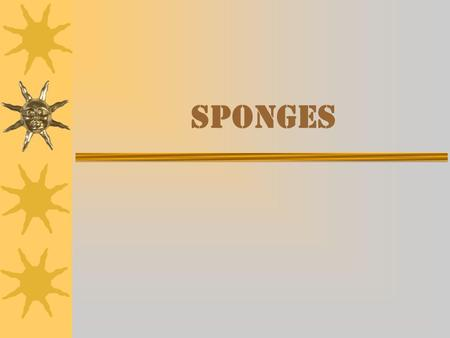 Sponges. Classes of Sponges  There are three different classes of sponges: –Calcarea –Silica (or glass) –Elastic.