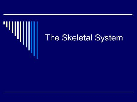 The Skeletal System. 5 Functions Of The Skeletal System  Support: Gives form to the body.  Protection: Protects vital internal organs, acts as a shield.