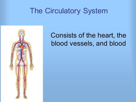 The Circulatory System Consists of the heart, the blood vessels, and blood.