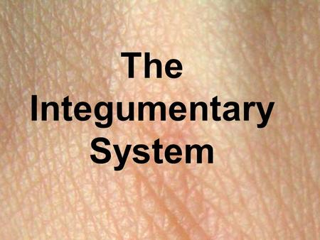 The Integumentary System. Skin The largest organ in your body Functions Covers the body and prevents water loss Protects the body from injury and infection.