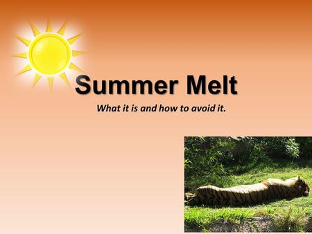 What it is and how to avoid it. Summer Melt. Summer Melt is the phenomenon when seemingly college-intending students fail to enroll in college the fall.